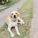 dobo_the_dog